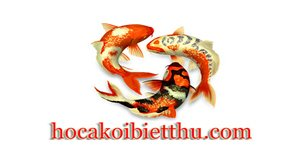 Thiết kế hồ cá koi