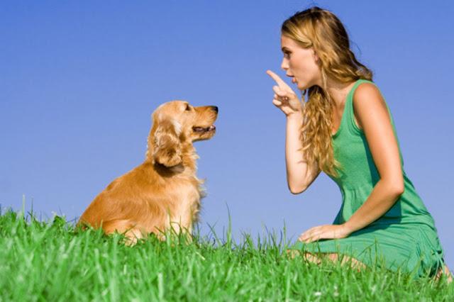 Phương phát và kỹ thuật huấn luyện chó cơ bản